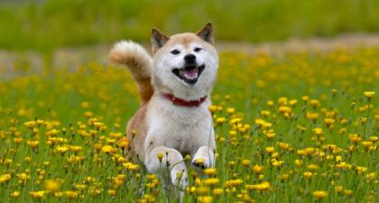 Dogecoin breaks $0.70 and flips Ripple